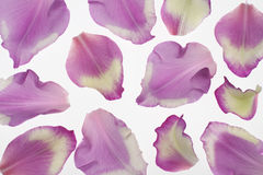 Gladiolus petals Royalty Free Stock Images