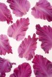 Gladiolus petals Stock Images