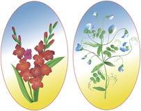 Gladiolus and Pisum. Beautiful flowers Gladiolus and Pisum Royalty Free Stock Images