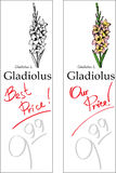 Gladiolus - Two price Tags Stock Photography