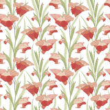 Gladiolus. On a white background in seamless pattern Stock Photo