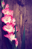 Gladiolus on a wooden background Stock Photos
