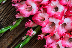 Gladiolus on a wooden background Stock Photography