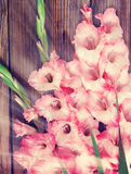 Gladiolus on a wooden background Royalty Free Stock Photos