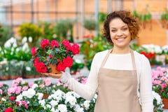 Gladlynt blomsterhandlare som framlägger en blomma Arkivfoto
