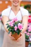 Gladlynt blomsterhandlare som framlägger en blomma Royaltyfri Foto