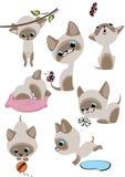 gladlynt färdiga kattungar ställde in siamese Arkivfoton