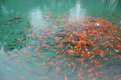 Gladlynt fiskbad Arkivfoto