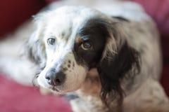 Gladlynt hund Arkivbild
