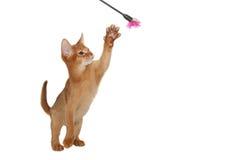 gladlynt katt royaltyfria bilder