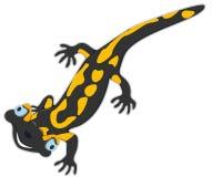 Gladlynt salamander Royaltyfria Bilder