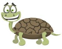 gladlynt sköldpadda Arkivbilder