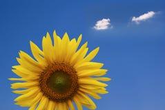 gladlynt solros royaltyfria bilder