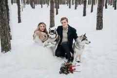 Gladlynta par spelar med siberian skrovligt i snöig konstverk för skogvinterbröllop Arkivbild
