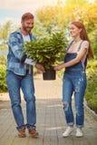 Gladlynta trädgårdsmästare som bär den lade in växten Arkivbilder