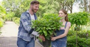 Gladlynta trädgårdsmästare som bär den lade in växten stock video