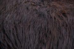 Glama лама ламы абстрактная текстура шерсти конца предпосылки вверх стоковая фотография