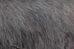 Glama лама ламы абстрактная текстура шерсти конца предпосылки вверх Стоковое Изображение