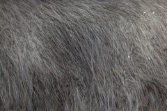 Glama лама ламы абстрактная текстура шерсти конца предпосылки вверх Стоковое фото RF