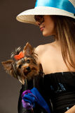 Glamor woman with Yorkshire Terrier Royalty Free Stock Images