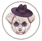 Glamorous dog Royalty Free Stock Images