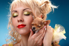 Glamorous girl holding a chihuahua dog. Blonde hugging a puppy. Yellow dress on a blue background Stock Image