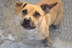 Glance a stray dog Stock Photography