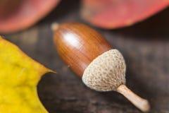 Gland et feuilles d'automne photos libres de droits