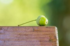 Gland vert sur un banc brun Photo stock