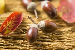 Glands et feuilles d'automne images libres de droits