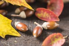 Glands et feuilles d'automne photo libre de droits