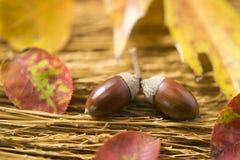 Glands et feuilles d'automne photographie stock libre de droits