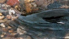 Glanis montrous d'un Silurus de poisson-chat de wels en belle rivière propre à Albi dans les sud de la France images stock