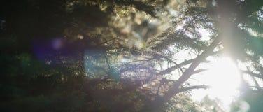 Glans en de zon` s stralen die door de takken van bomen filtreren Stock Foto