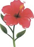 Glans hibiscus in vector Royalty-vrije Stock Afbeelding