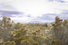 Glans op gele heuvels royalty-vrije stock foto