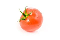glansig tomat 2 arkivbilder