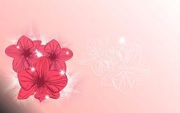 Glanst het orchidee roze flard van licht bloemtederheid Stock Afbeelding