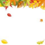 Glanzend Autumn Natural Leaves Background Vector Stock Afbeeldingen