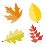 Glanzend Autumn Natural Leaves Vector Illustration Royalty-vrije Stock Foto