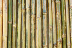 Glanzende bamboemuur Stock Afbeeldingen