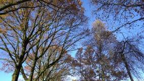 Glanzende Bomen in Daglicht stock footage