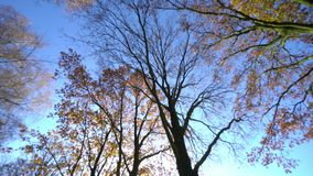 Glanzende Bomen in Daglicht stock video