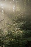Glanzende de winterspar Royalty-vrije Stock Afbeeldingen