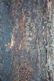 Glanzende geborstelde zilveren metaaloppervlakte Stock Afbeeldingen