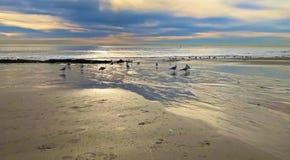 Glanzende gouden zonsondergangvogels royalty-vrije stock foto