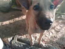 Glanzende hondogen stock foto's