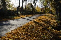 Glanzende kleurrijke weg Stock Afbeeldingen