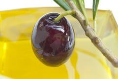 Glanzende olijf royalty-vrije stock fotografie