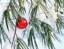 Glanzende rode Kerstmisbal in een pijnboomboom Royalty-vrije Stock Fotografie
